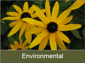 click to view environmental information