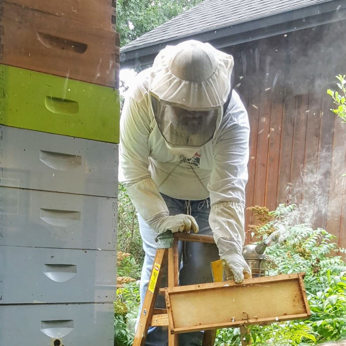 Beekeeper tending to hive